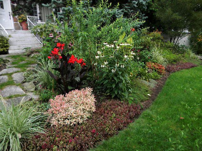Jardin qu b cois photo plante vivace annuelle tropicale for Prix plantes vivaces